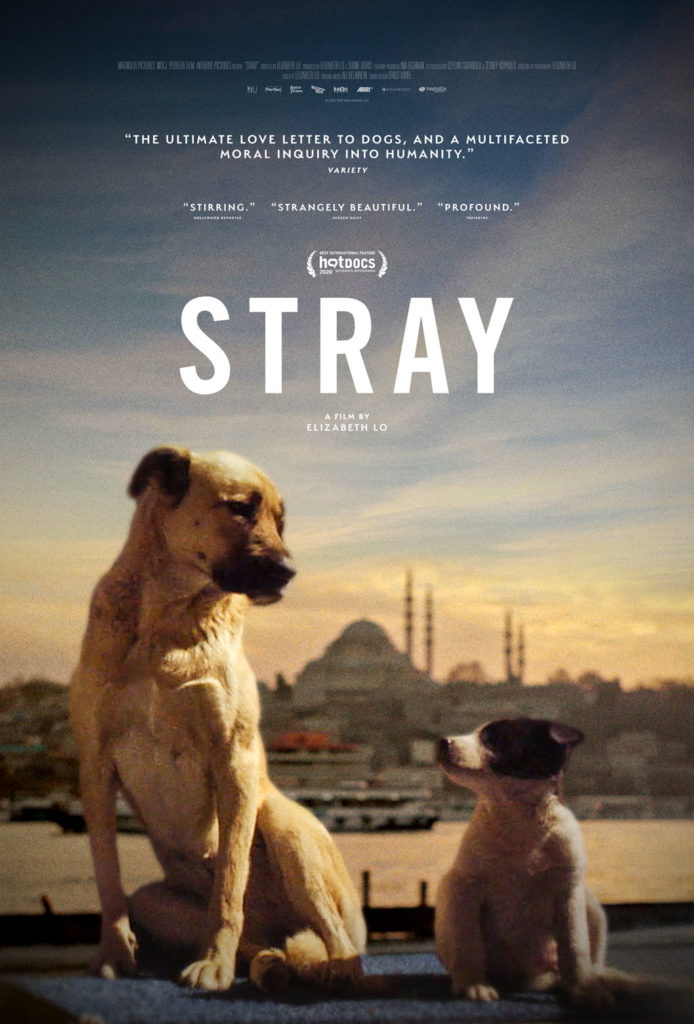 Dog Doc STRAY Gets a Trailer 1